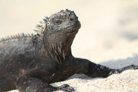 Ecuador4 Galapagos (118)
