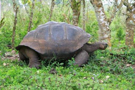 Ecuador5 Galapagos (178)