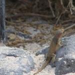 Les îles Galápagos, la faune : à propos de ….