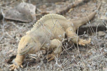 Ecuador5 Galapagos (465)