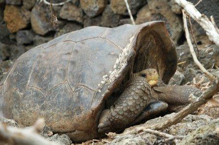 Ecuador5 Galapagos (77)