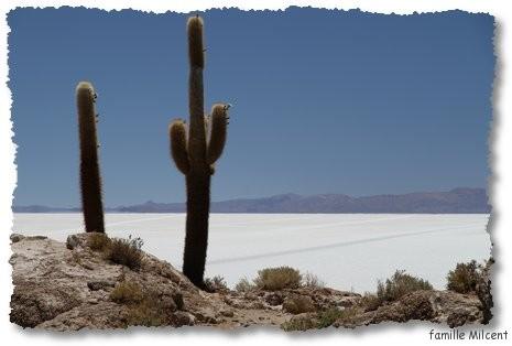 Bolivie3 Uyuni (273)