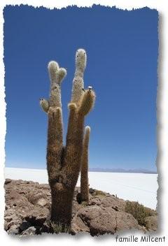 Bolivie3 Uyuni (284)