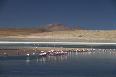 Bolivie3 Uyuni (484)