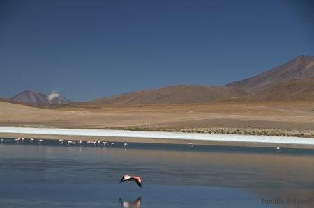 Bolivie3 Uyuni (488)