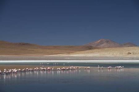 Bolivie3 Uyuni (493)