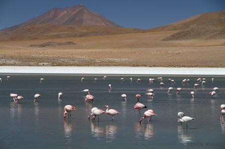 Bolivie3 Uyuni (519)