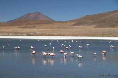 Bolivie3 Uyuni (520)