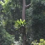 Kuala Lumpur, promenade dans la jungle