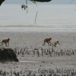 Bornéo, Parc National de Bako
