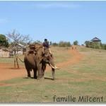 Trek dans la forêt de Mondolkiri avec un éléphant