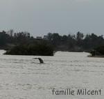 Les dauphins de Kratie avec nos amis Kiwis